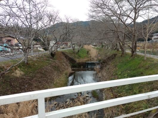 小川 田舎 桜並木